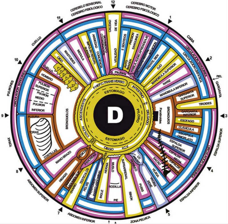 iridologia ojo derecho