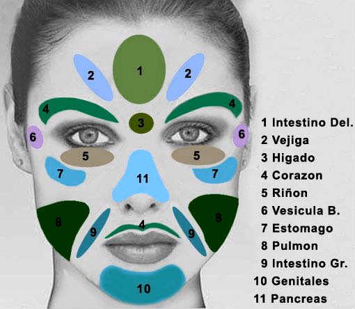 mapa reflexologia facial