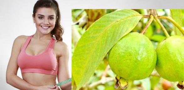 hojas de guayaba para bajar de peso