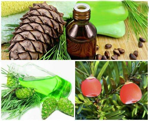 usos medicinales de la trementina