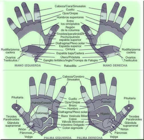 puntos de reflexologia en las manos