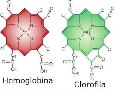 Clorofila y sangre humana