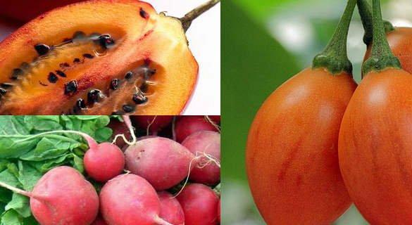 rabano y tomate de árbol para adelgazar