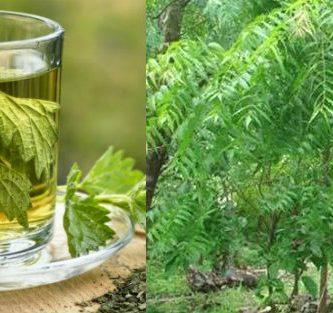 que enfermedades cura el neem