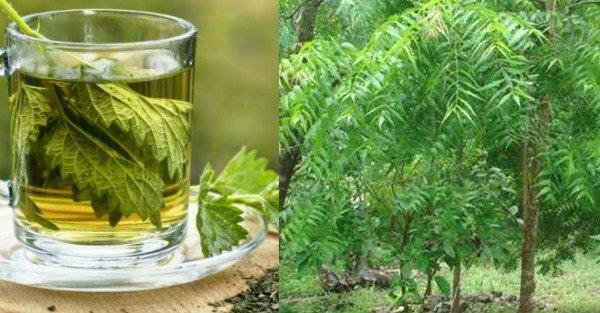 para que sirve el neem como planta medicinal