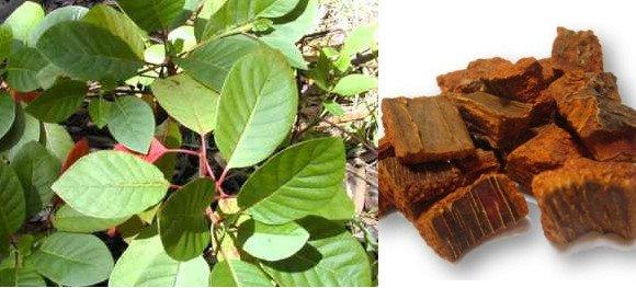 para que sirve la quina como planta medicinal