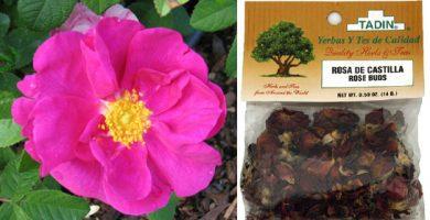 para que sirve la rosa de castilla como planta medicinal