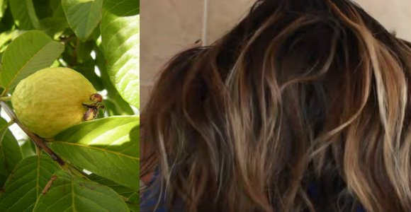 hojas de guayaba para el cabello