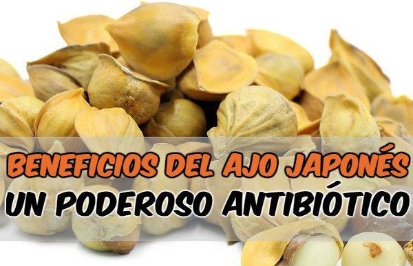 beneficios del ajo japonés y como tomarlo