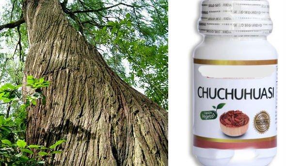 beneficios del chuchuhuasi medicinal