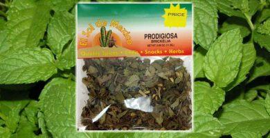 usos de la hierba medicinal prodigiosa