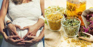 Hierbas medicinales para quedar embarazada