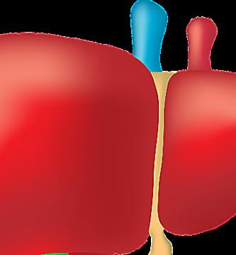 7 Remedios Naturales En Medicina Natural Para El Hígado Graso